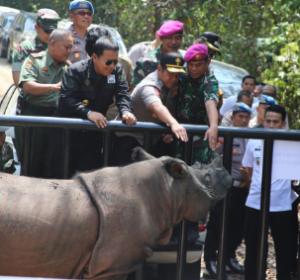 Gubernur Lampung Komitmen Lindungi Badak Sumatera