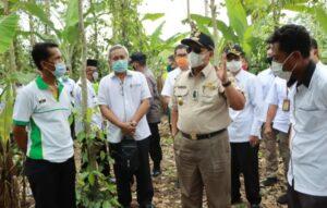 Gubernur Lampung Tinjau Kebun Lada di Marga Tiga