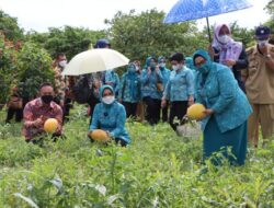 Riana Sari Dampingi TP PKK Pusat Tinjau Agropark Sabah Balau