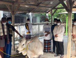 Pemprov Lampung Qurban 36 Sapi dan 10 Kambing